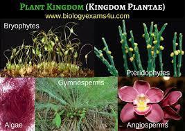 Plant Kingdom Questions